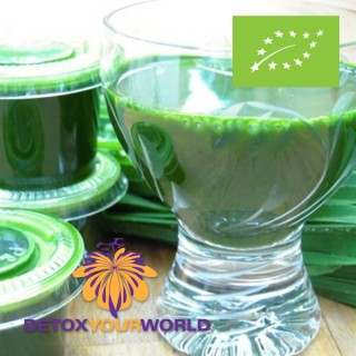 Live Wheatgrass Juice - 8 Month Supply