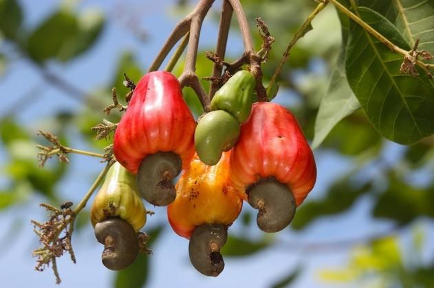 fruit smoothie recipes do cashews come from a fruit